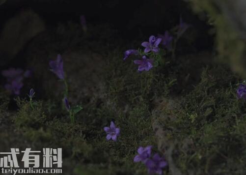 韩剧王国生死草要怎么才能得到 生死草有什么用 生死草作用解析